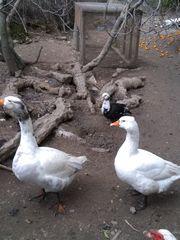 μεγάλο πουλί σφιχτό γαϊδούρια Λεσβίες μαμάδες vs κορίτσια