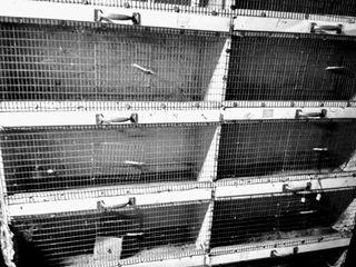 174535ebcd5c Κλούβα πουλιών με 10 ζευγαρωστρες